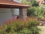 Nice spots in the Villa Panagos garden