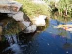 Listening to the waterfall, feeding the koi, and enjoying dozens of bird and their song surround you