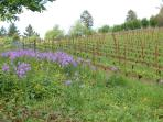 Springtime in the Willamette Valley
