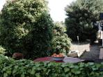 Terrace and frontyard