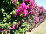 Private closed condo gardens