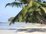 vue vers le sud, plage de sable fin, bordée de cocotiers