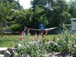 Backyard, spring 2011