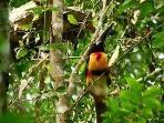 Get a closer look at the variety of birds at the Botanical Gardens