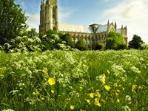 Beverley Minster from the meadow