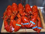 Lobsters waiting for butter!