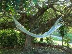 hammock next to side porch