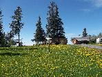 dandelions & view of yard- house