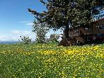 dandelions & side of house & view