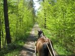 Or you can take a ride through the forest in a horse-drawn carriage