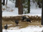more neighbors,gobble gobble