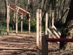 trim in Siana forest