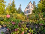 Seasonal flora include blueberries, lingonberries, reindeer moss, and catmint.