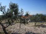 Villa Zizanj between the olive trees