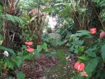 Verdant hapu'u ferns and striking 'Hawaiian hearts,' our anthurium gardens.