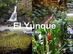 Rain Forest-El Yunque