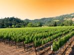 The Beauty of Sonoma County Wine Country