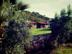Olive trees and wooden houses.