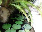 Zen Lily Ponds