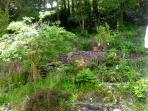 Wild back garden
