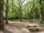 New Forest  - Bolderwood, great place to see local deers and picnic
