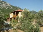Olive Lodge surrounded by the olive grove