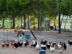 Corral con animales