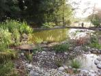 Garden Wildlife ponds