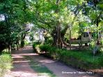 Drive way to Bungalow. Did you ever dream that Upie's Folly was part of Nature ?