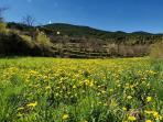 Florecer de la primavera en Tornafort