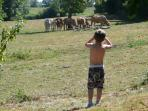 A taste of rural France for the children to enjoy on the doorstep !