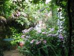 a corner of Croftsbrook garden in summer