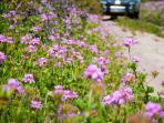 Wildflowers in Spring.