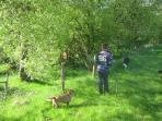 Walking the dogs at the back of the cottage