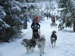 Husky rally every January at Loch Morlich 20 minutes drive