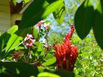 Villa, il giardino tropicale