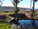 Back garden, overlooking The Kranz nature reserve