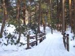 Walk or Cross Country Ski on Connecting Trail to Neighboring State Park