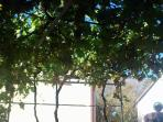 Vines provide shade on hot summer days