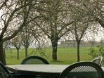 View through the orchard of the two acre field. Plenty of space for the children to play.