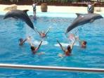 Wonderful Mundomar with the Dolfins