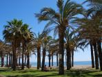 Palms between Montemar and La Carihuela beaches