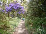 Out for a spring walk beside the bluebells & azaleas  in the glorious sunshine..at Pencarrow Hou