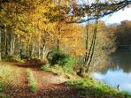 Royal Forest of Dean in Autumn