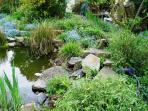 Gartenteich / garden pond