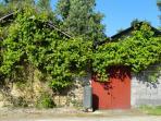 Workshop adorned with grapevine