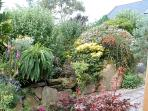 The pretty Courtyard Garden is a sun trap and home to a great variety of plants and shrubs
