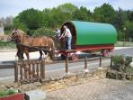 Horse drawn wagons go past daily in Summer
