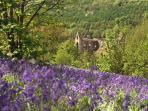 May is the bluebell season and visitors can take the opportunity to photograph these.