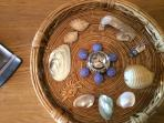 Tray with shells